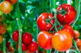 Ajutor de minimis pentru aplicarea programului de sustinere a produsului tomate in spatii protejate pentru anul 2018