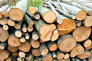 Cerere lemne de foc 2020